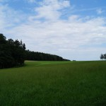 Altomünster Sommer 2014 (15)