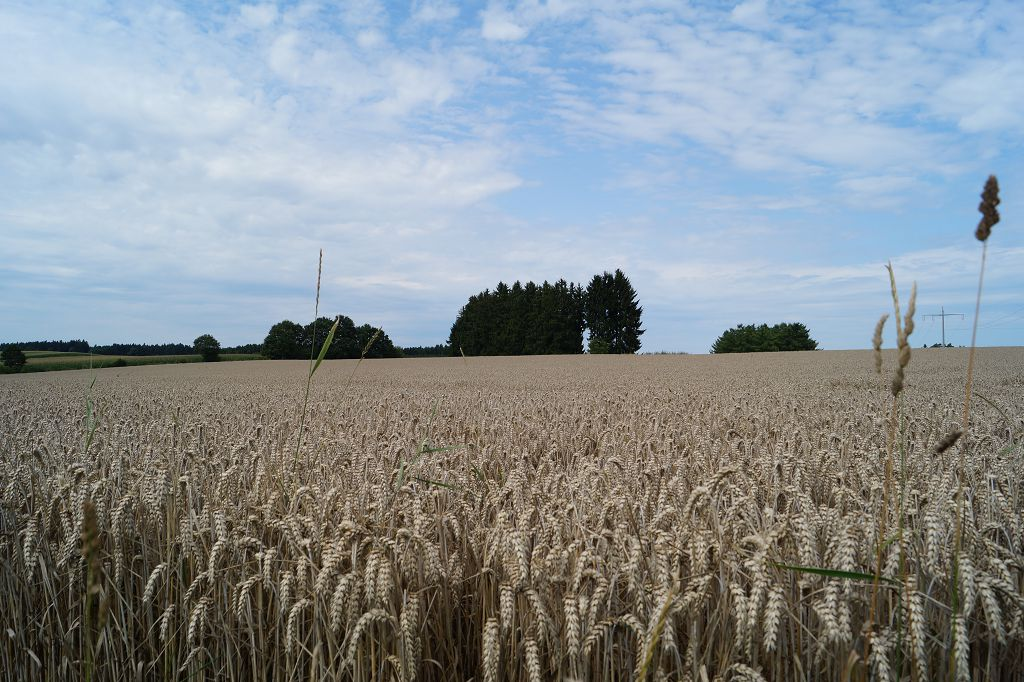 Altomünster Sommer 2014 (4)