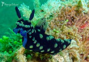 Lembeh Strait (Amazing Sulawesi)